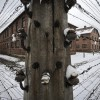Some Holocaust lessons being forgotten as survivors gather at Auschwitz 70 years on