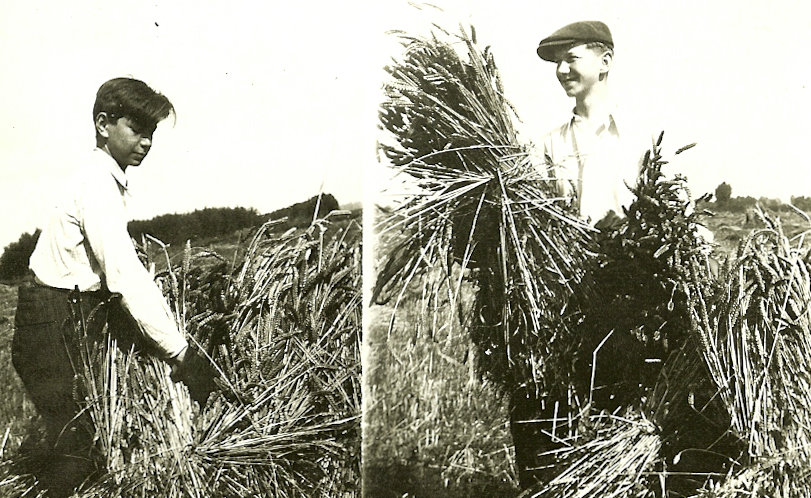 Image: Hanus Grosz, right, and Karel Grosz working in a field in Warborough, Britain. Credit Anita Grosz